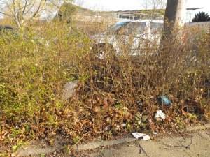 Müll in einer Grünanlage Heidberg
